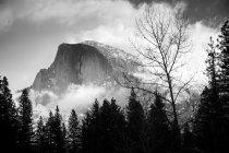 Snowcapped купол половини рок і соснових дерев — стокове фото