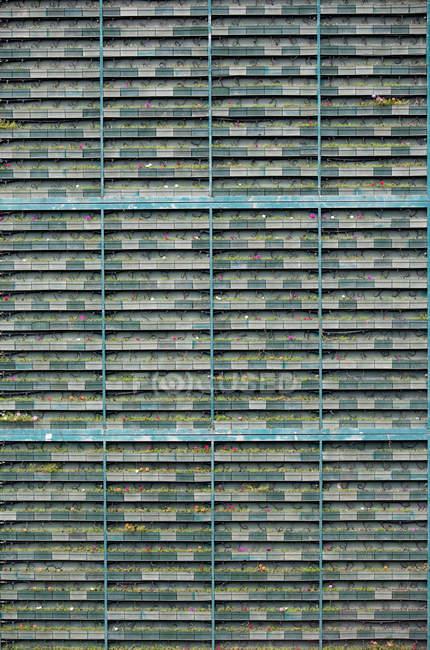 Vertical greenery growing on test walls in Singapore Botanical Gardens. - foto de stock