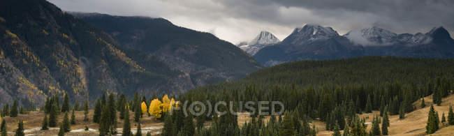 Couleurs d'automne sur les Molas Pass avec les montagnes de Grenadier dans le fond, la forêt nationale de San Juan, Silverton, Colorado — Photo de stock