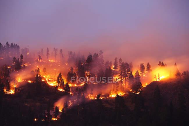 Feu de forêt bois le flanc d'une montagne à oriental Missoula, Montana — Photo de stock