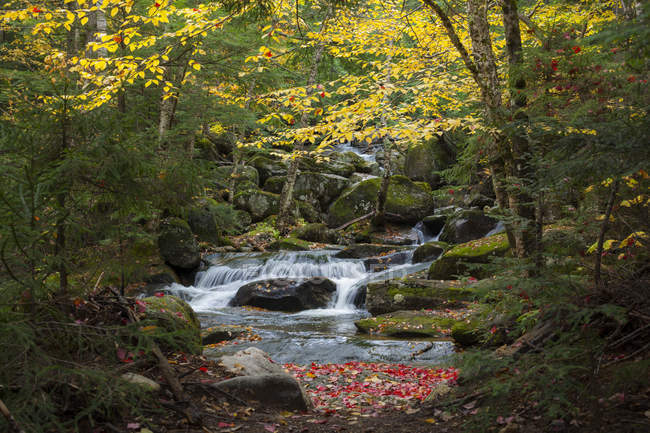 Водопад на Брук Снайдер в осень, Белая гора National Forest, Нью-Гэмпшир — стоковое фото