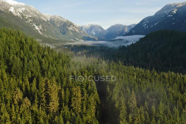 Лесистые долины Сеймур вблизи Ванкувер, Британская Колумбия, Канада — стоковое фото