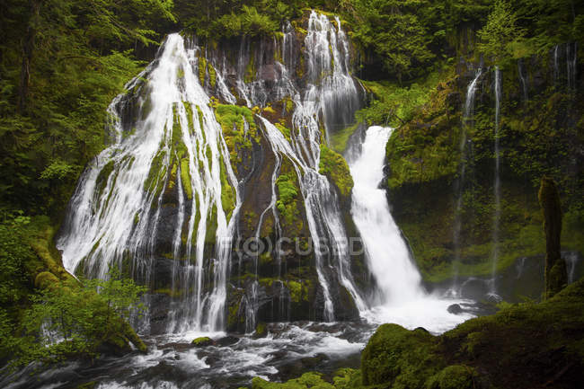 Waterfalls cascade over lush vegetated cliffs at Panther Creek Falls in Carson, Washington — Stock Photo