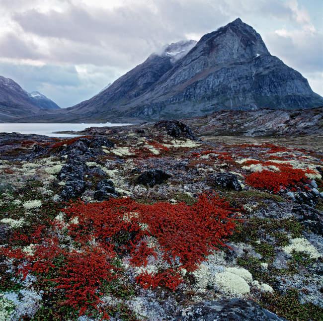Cores de Outono no Ártico no Fiorde Ammassalik na Gronelândia Oriental — Fotografia de Stock