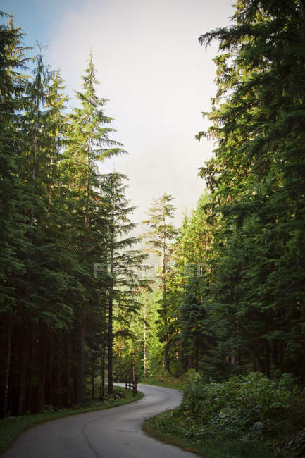 Проложили путь ветры через густой лес возле Ванкувер, Британская Колумбия, Канада — стоковое фото