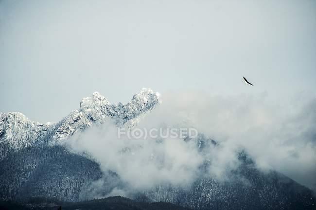 Орел летит выше снега вершины покрыты — стоковое фото