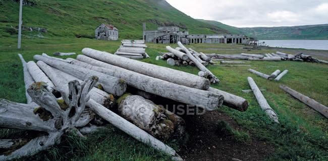 Коряги напротив старой фабрики в Nordurfjordur фьорд в отдаленных Вестфирдир Исландии — стоковое фото