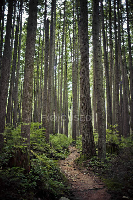 Single track trail winds through a lush forest — Stock Photo