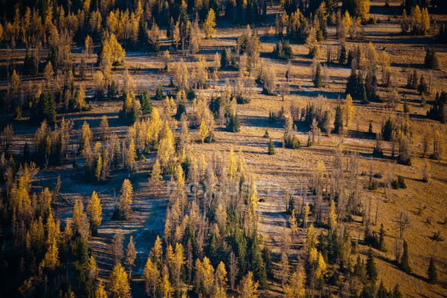 Лиственница Деревья и некоторые хвойные разбросаны по большой субальпийской области в Мэннинг Провинциальный парк возле морозный пик в Британской Колумбии, Канада — стоковое фото