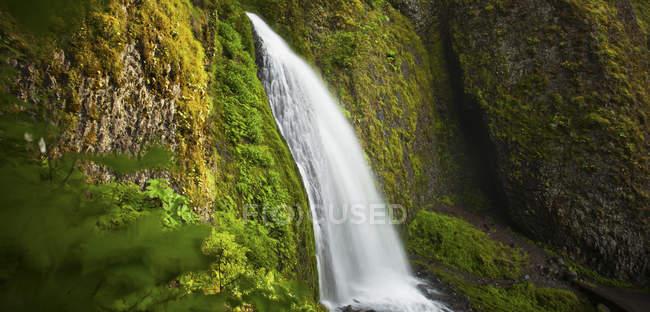 Пышная растительность окружает Wahkeena водопад в ущелье реки Колумбия, Орегон — стоковое фото