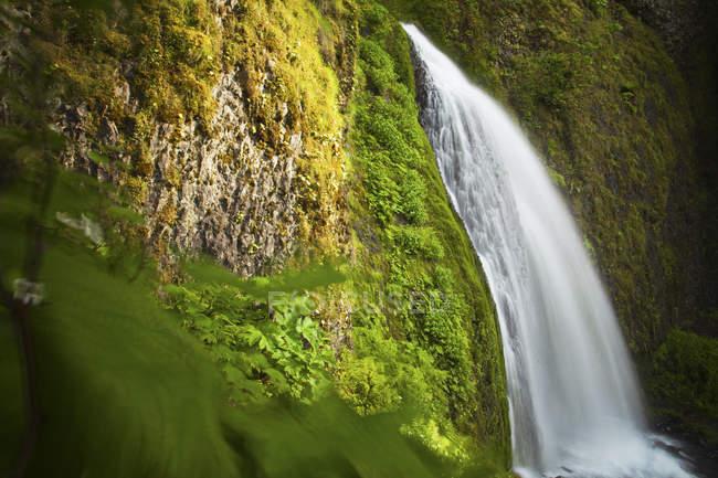 Üppiger Vegetation umgibt Wahkeena verliebt sich in Columbia River Gorge, Oregon — Stockfoto