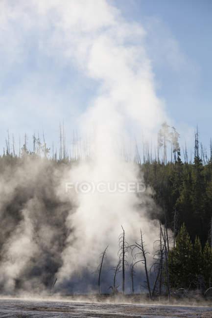 Bäume stehen tot, getötet durch Hitze und Schwefel, in einem dampfend heißen Mineralbecken im Yellowstone Nationalpark, — Stockfoto