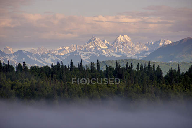 Scenic view of fog blanketed over evergreens with mountains in the background at sunset.   Denali National Park, Alaska, USA — Stock Photo