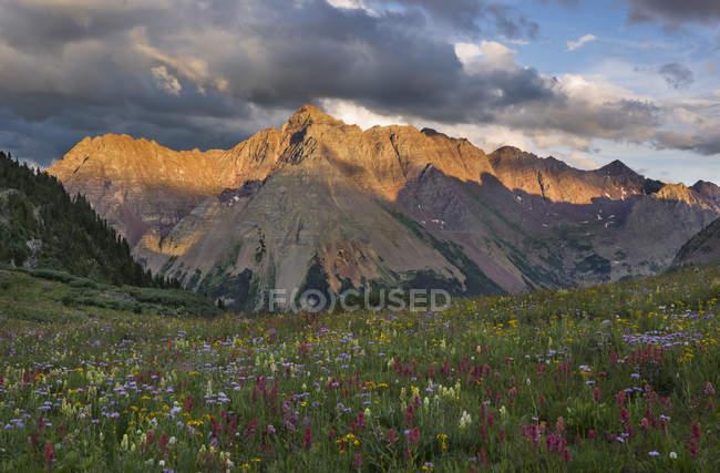 Coucher de soleil sur la pyramide de pointe, un des importants populaires de Colorado et un champ de fleurs sauvages sur le col de cuir suédé près d'Aspen — Photo de stock
