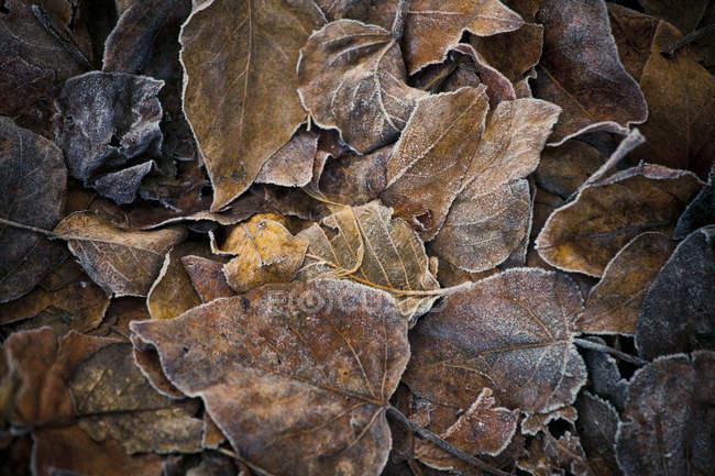 Полный кадр замороженные листья на фоне земли — стоковое фото
