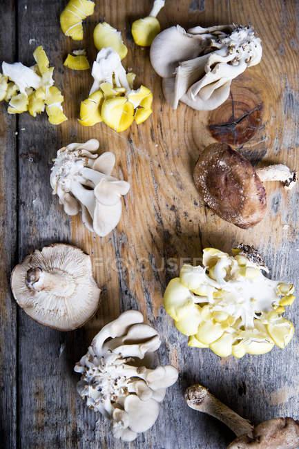 Вид зверху розташовані різні Свіжезібрані гриби на дерев'яні поверхні — стокове фото