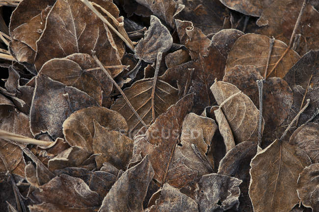 Full frame of frosted leaves litter backdrop — Stock Photo