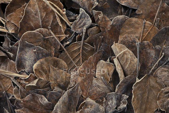 Повний кадр матового листя послід тлі — стокове фото