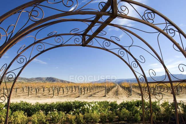 Metall Bogen umrahmt einen Weinberg im Herbst in Temecula, Kalifornien — Stockfoto