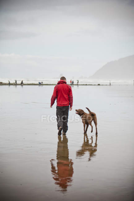 Rear view of man and dog walking on Cannon Beach in Oregon, United States. — Stock Photo