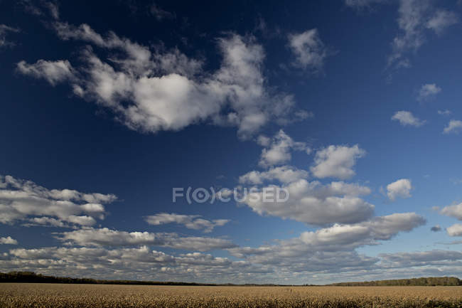 Scenic view of cloudy sky and cornfield in autumn — Stock Photo