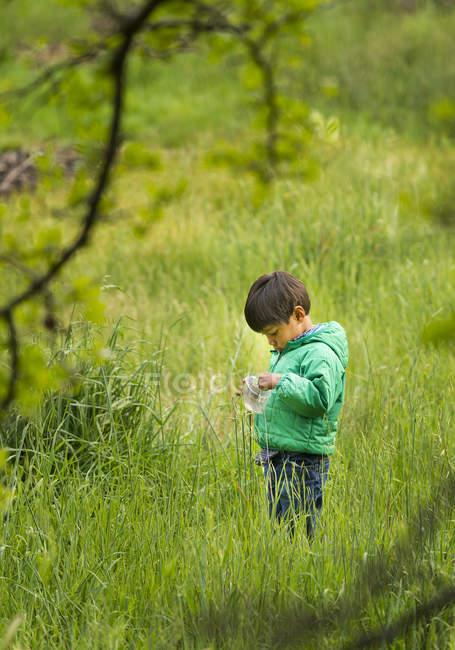 Joven, recoger insectos en el pasto - foto de stock