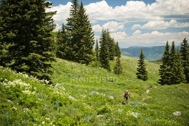 Туристические походы вниз тропа через полонину в Солнечный день в Ямпа, Колорадо — стоковое фото