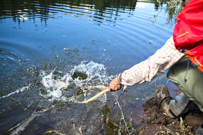 A fly fisherman pulls his catch out of the water with a net in Yampa, Colorado. — Stock Photo
