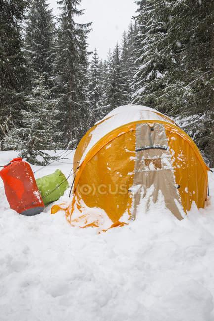 Tente jaune mis en place lors de chutes de neige en bois — Photo de stock