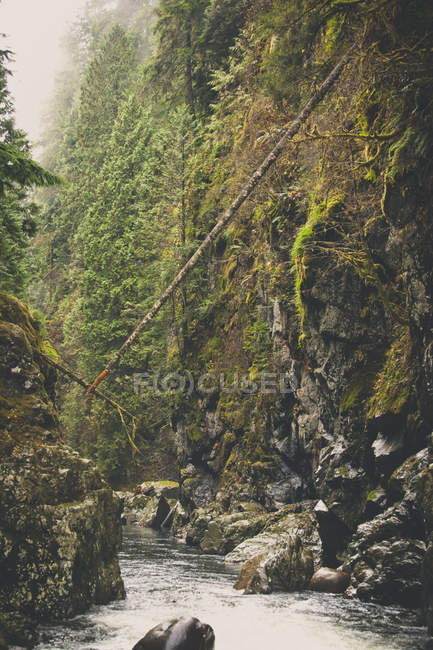 Seymour River canyon, North Vancouver, BC — Stock Photo