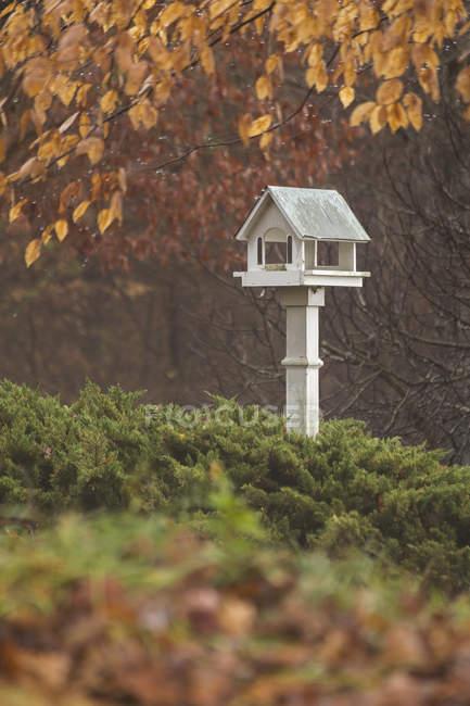 Vogelhaus und Herbst Farbe eingehüllt in Nebel — Stockfoto