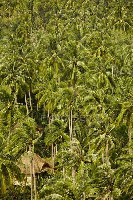 Хатин в Палм лісу на пляж Рейлей — стокове фото