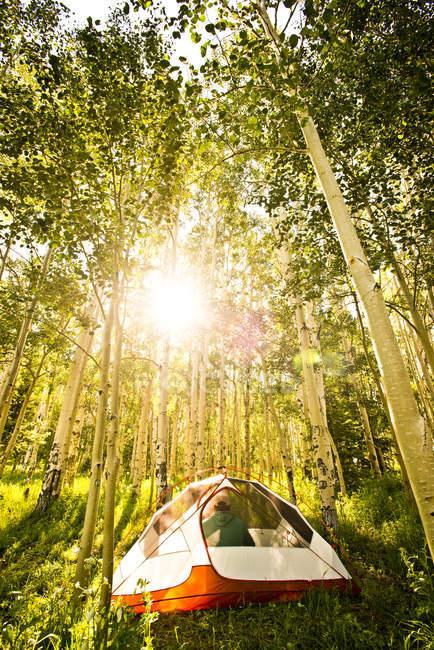 Солнце светит через рощу Аспен на автофургоне внутри его палатку в Ямпа, Колорадо — стоковое фото
