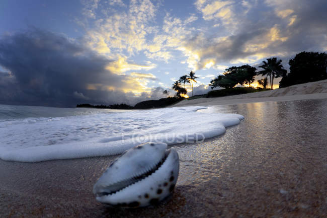 Wave breaking to shore on the north shore of Oahu — Stock Photo
