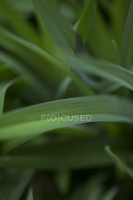 Close up of fresh green grass — Stock Photo