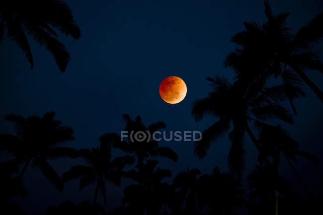 Silhouette Of Palm Trees Against Colorful Moonrise — Stock Photo