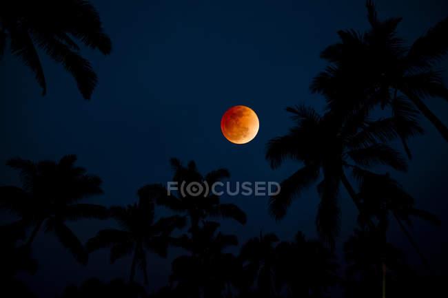 Силуэт пальмовых деревьев против красочные Восход Луны — стоковое фото