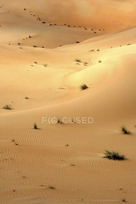 Dunas de areias com arbustos no deserto de Dubai, Dubai, Emirados Árabes Unidos, Médio Oriente — Fotografia de Stock