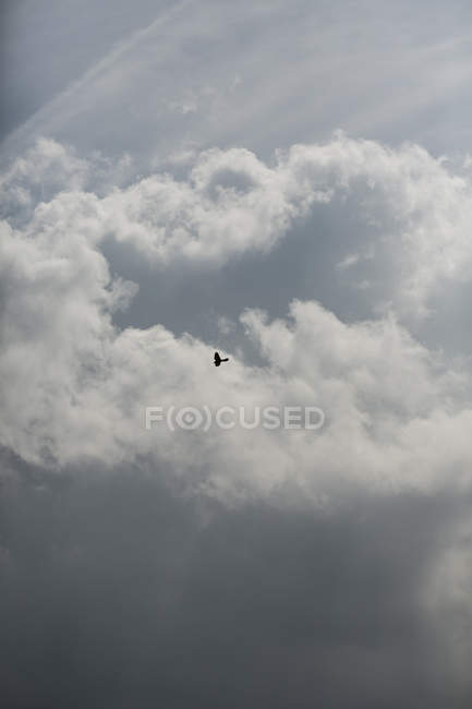 Bird against cloudy sky, selective focus — Stock Photo