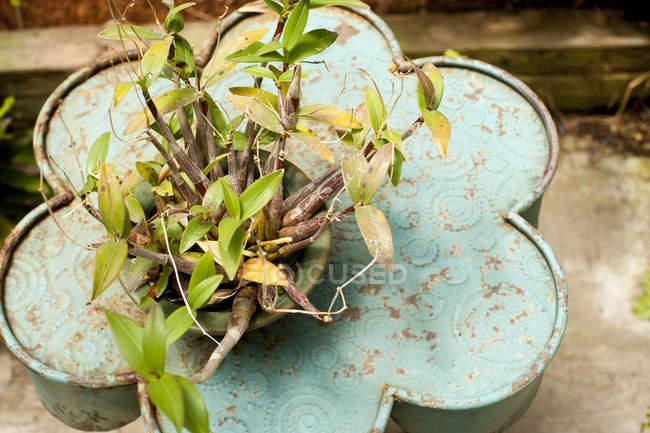 Chiuda sulla vista di pianta di orchidea in vaso di fiori sulla superficie di metallo — Foto stock