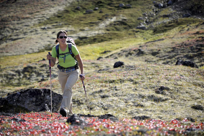 Female hiker hikes up the Snowhawk Valley below the flanks of Tikishla Peak (5230-feet) in the Chugach Mountains north of Anchorage, Alaska August 2011.  Even though the Snowhawk Valley is home to 5 of 12 peaks over 5000-feet in the Chugach Front Ran — Stock Photo