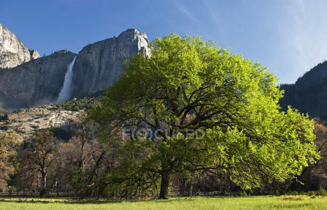 Observant la vue de Yosemite Falls du fond de la vallée dans le Parc National de Yosemite, Californie — Photo de stock