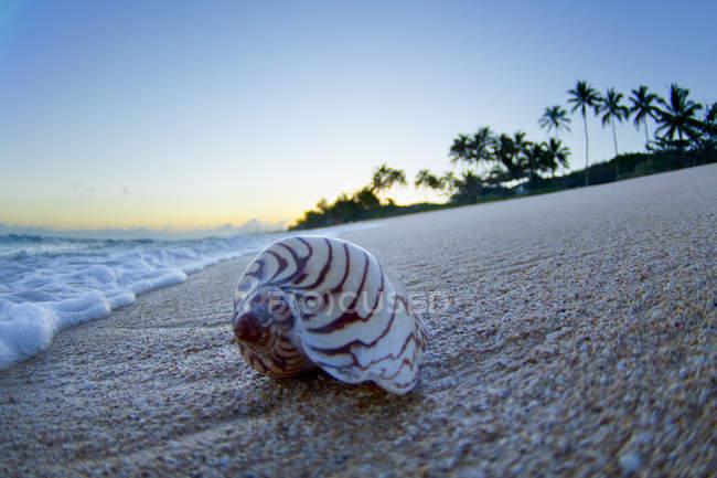 Coperture del mare sulla battigia durante l'alba in Hawaii — Foto stock