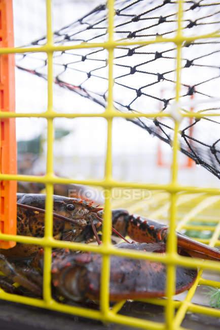 Homard dans un piège sur un bateau de pêche — Photo de stock