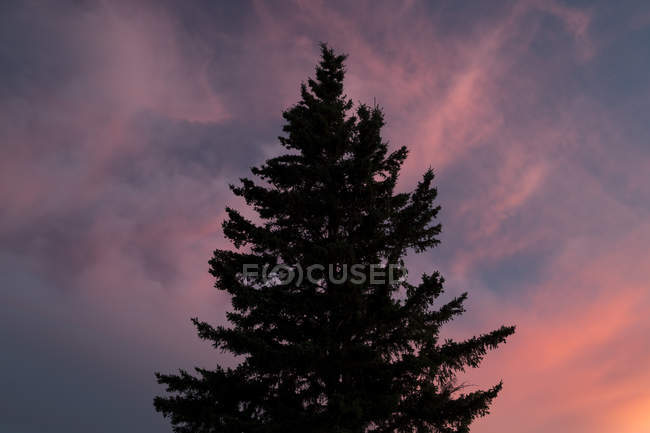 Silhouetted tree against a beautiful sunset in East Glacier Park, Montana — Stock Photo