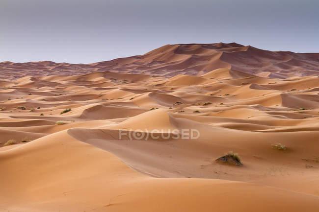 Dune di sabbia rossa a Erg Chebbi, deserto del Sahara. Merzouga, Marocco — Foto stock