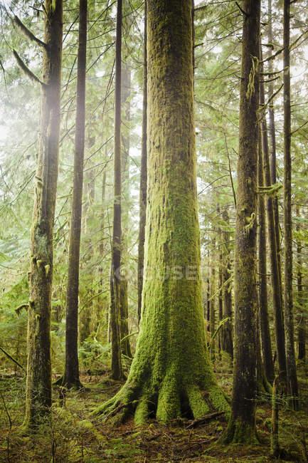 Morgensonne glänzt durch einen üppigen Wald — Stockfoto
