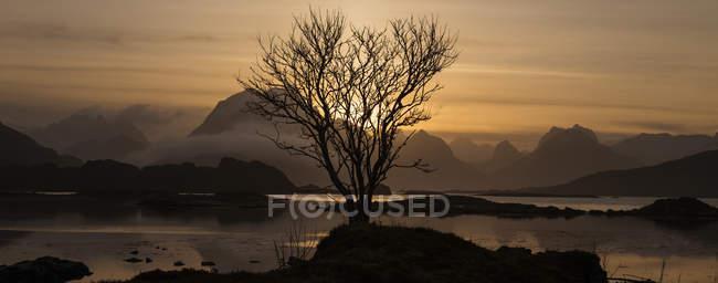 Einsamer Winter Baum Silhouette gegen Berg Sonnenuntergang, in der Nähe von Lofoten Inseln, Norwegen — Stockfoto