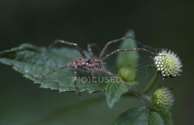 Araignée perché sur une feuille verte de Xilitla, San Luis Potosi, Mexique — Photo de stock