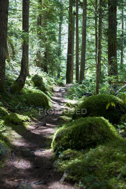 Scenic view of beautiful Umpqua River Trail — Stock Photo